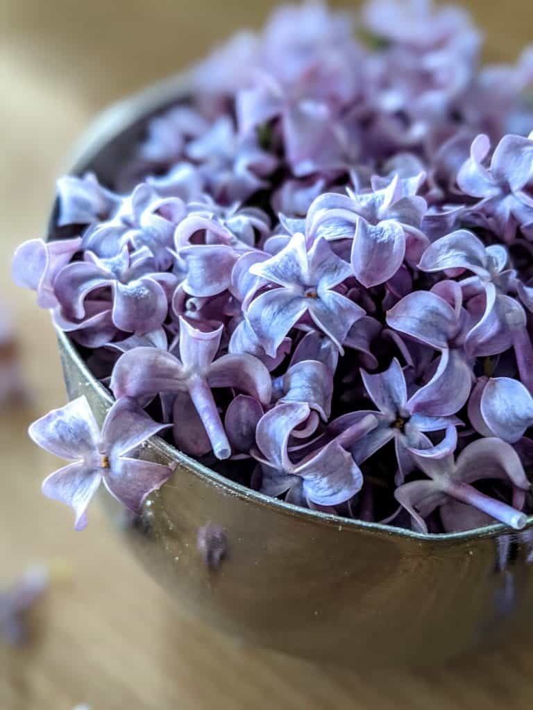 lilac flowers for tea