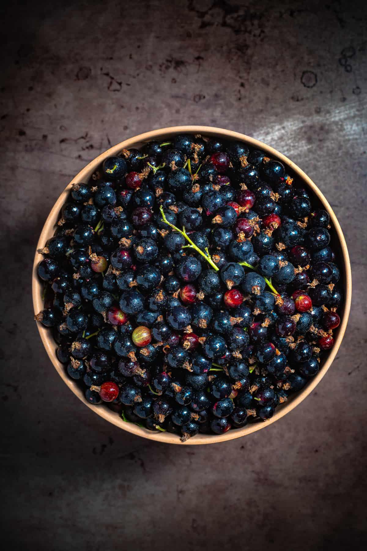 a big bowl of fresh blackcurrants